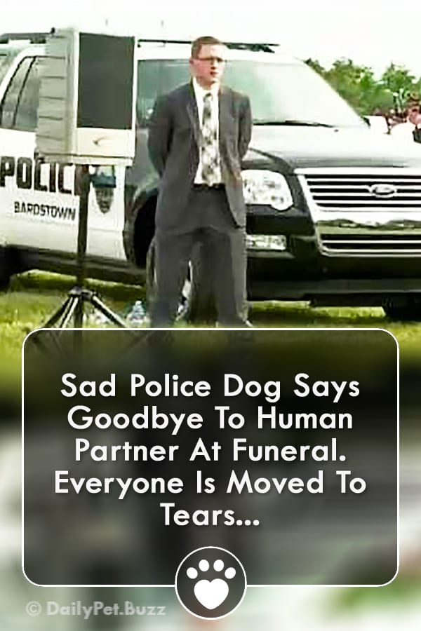 Sad Police Dog Says Goodbye To Human Partner At Funeral. Everyone Is Moved To Tears...