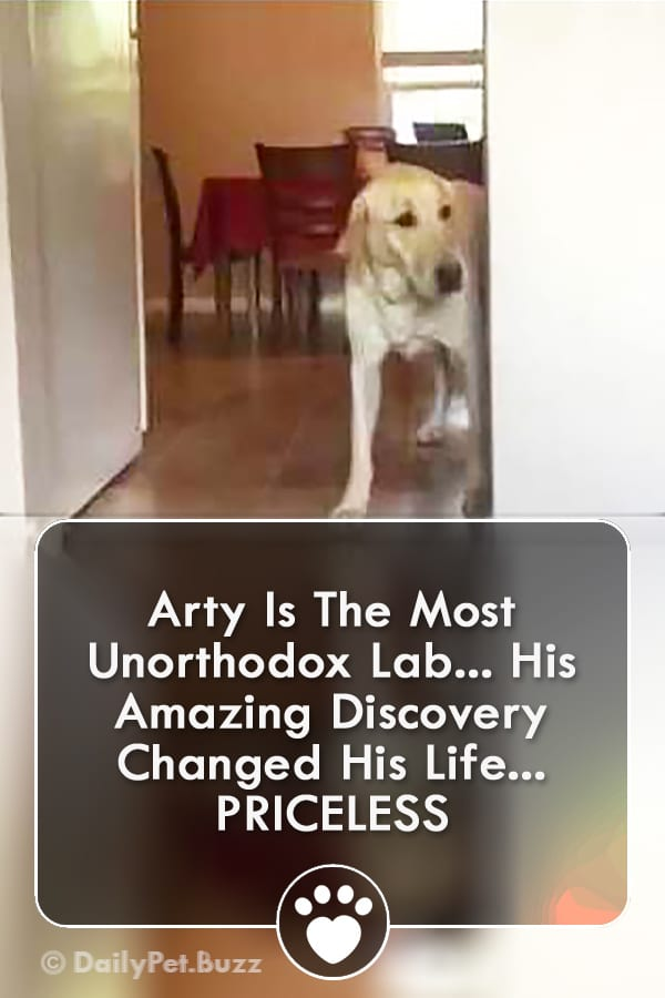 Arty Is The Most Unorthodox Lab... His Amazing Discovery Changed His Life... PRICELESS