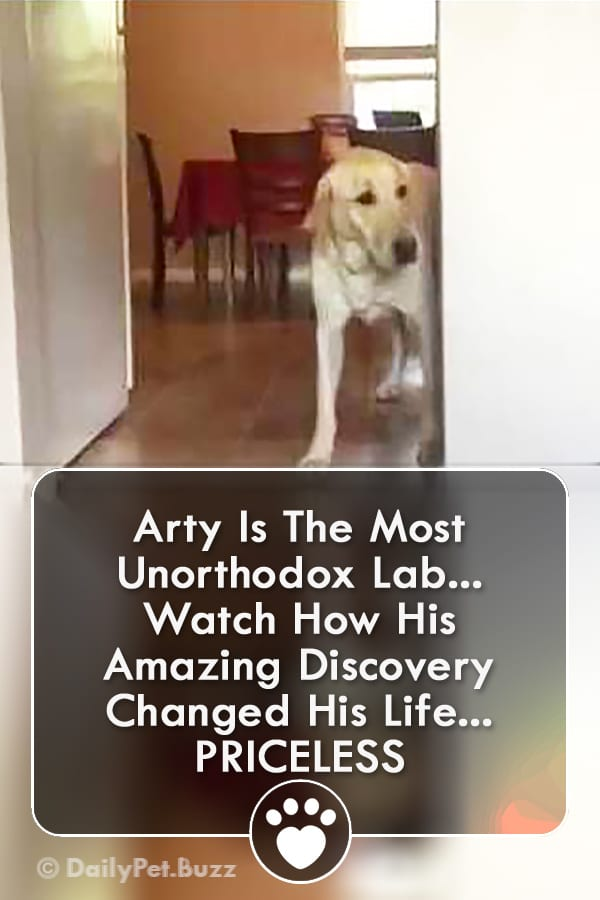 Arty Is The Most Unorthodox Lab... Watch How His Amazing Discovery Changed His Life... PRICELESS