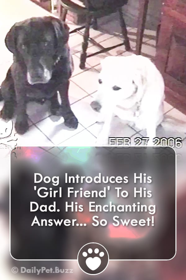 Dog Introduces His \'Girl Friend\' To His Dad. His Enchanting Answer... So Sweet!