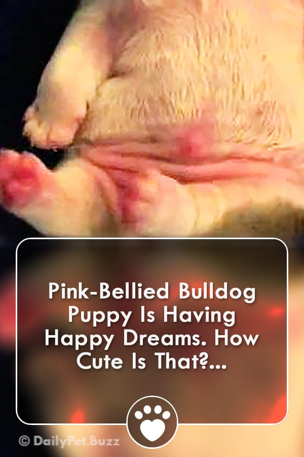 Pink-Bellied Bulldog Puppy Is Having Happy Dreams. How Cute Is That?...