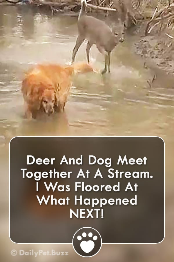 Deer And Dog Meet Together At A Stream. I Was Floored At What Happened NEXT!