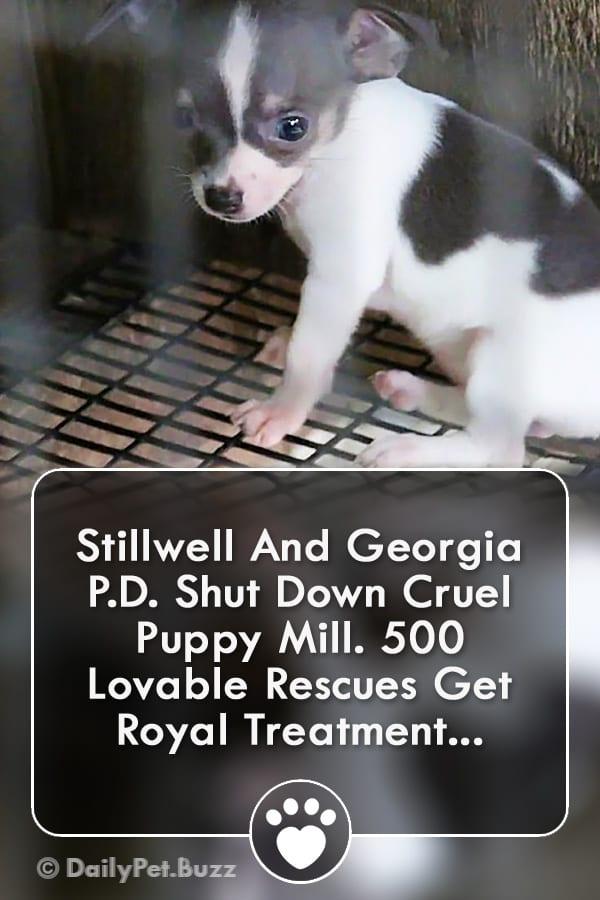 Stillwell And Georgia P.D. Shut Down Cruel Puppy Mill. 500 Lovable Rescues Get Royal Treatment...