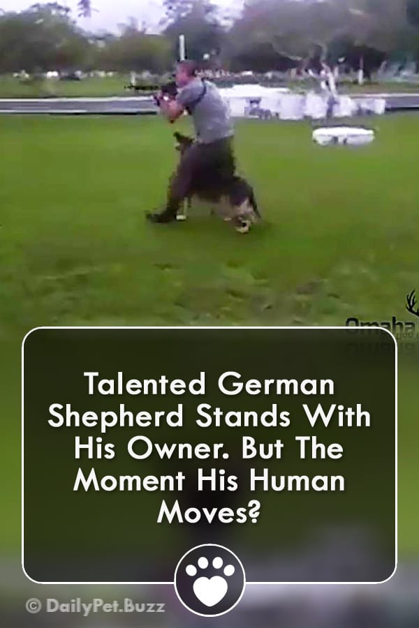 Talented German Shepherd Stands With His Owner. But The Moment His Human Moves?
