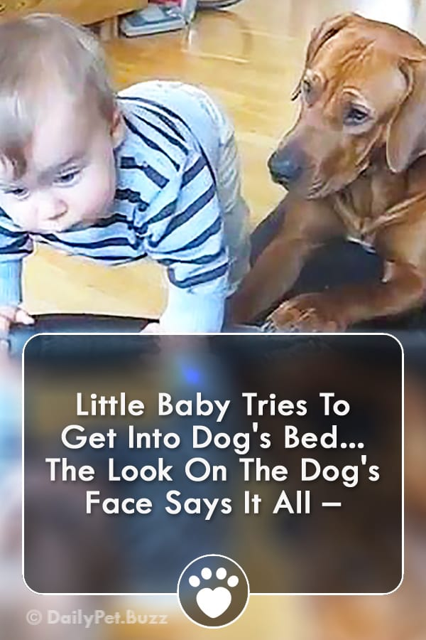 Little Baby Tries To Get Into Dog\'s Bed... The Look On The Dog\'s Face Says It All –