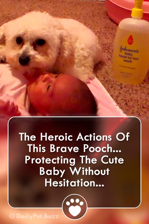 The Heroic Actions Of This Brave Pooch... Protecting The Cute Baby Without Hesitation...