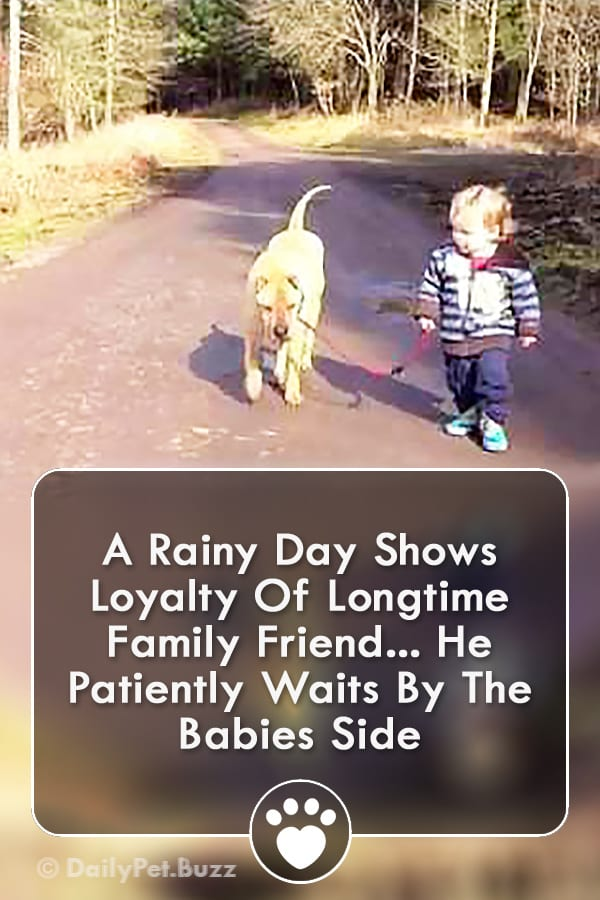 A Rainy Day Shows Loyalty Of Longtime Family Friend... He Patiently Waits By The Babies Side