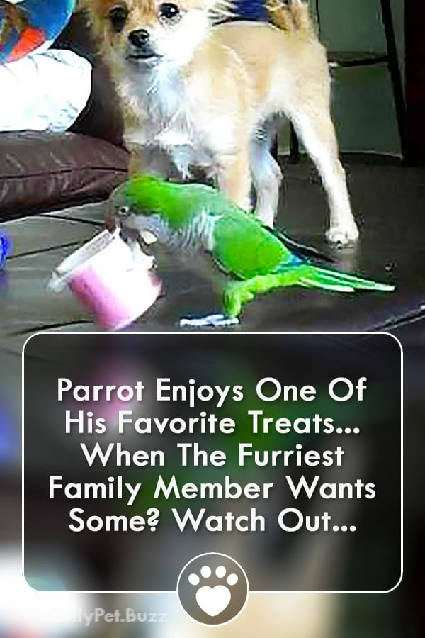 Parrot Enjoys One Of His Favorite Treats... When The Furriest Family Member Wants Some? Watch Out...