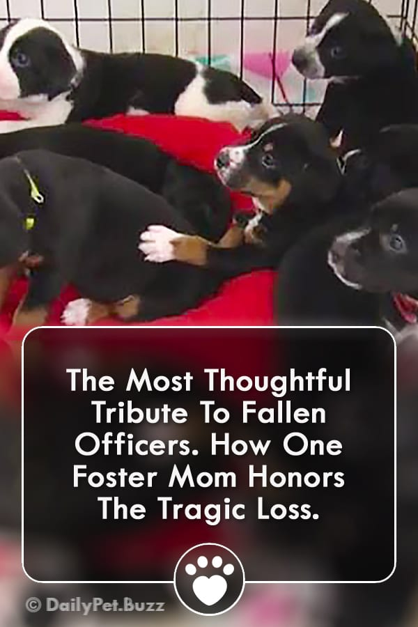 The Most Thoughtful Tribute To Fallen Officers. How One Foster Mom Honors The Tragic Loss.