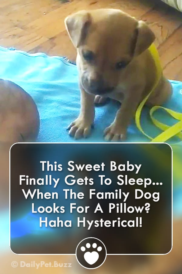 This Sweet Baby Finally Gets To Sleep... When The Family Dog Looks For A Pillow? Haha Hysterical!