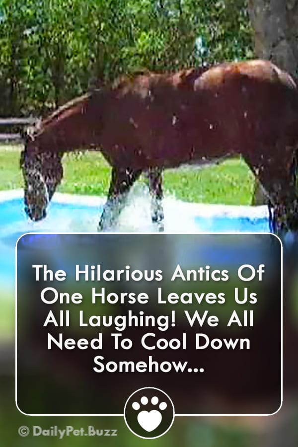 The Hilarious Antics Of One Horse Leaves Us All Laughing! We All Need To Cool Down Somehow...