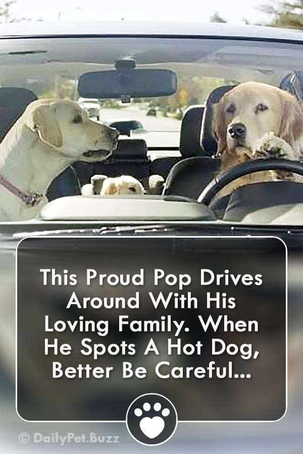 This Proud Pop Drives Around With His Loving Family. When He Spots A Hot Dog, Better Be Careful...