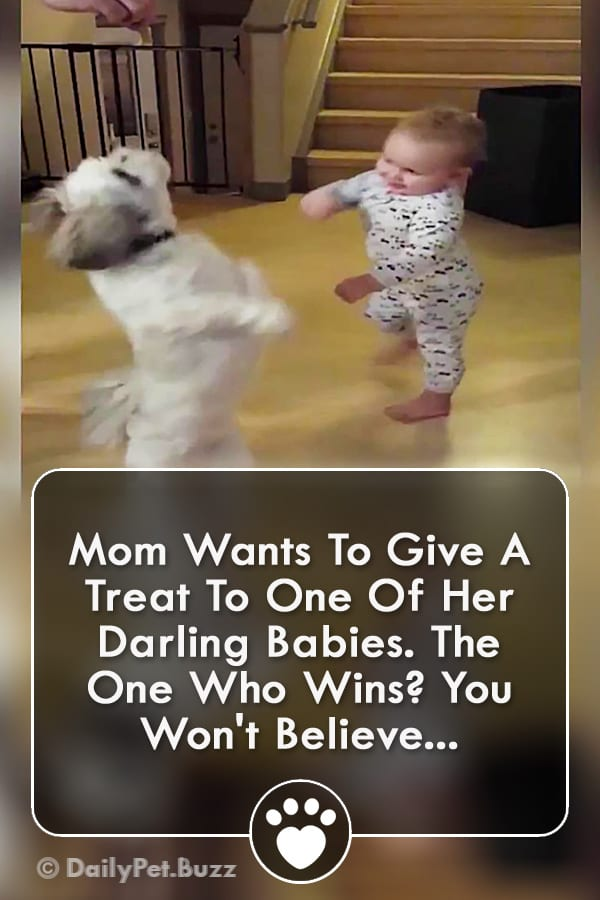 Mom Wants To Give A Treat To One Of Her Darling Babies. The One Who Wins? You Won\'t Believe...