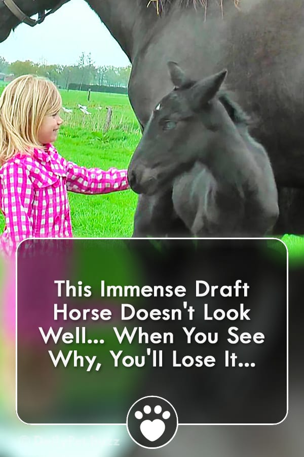 This Immense Draft Horse Doesn\'t Look Well... When You See Why, You\'ll Lose It...