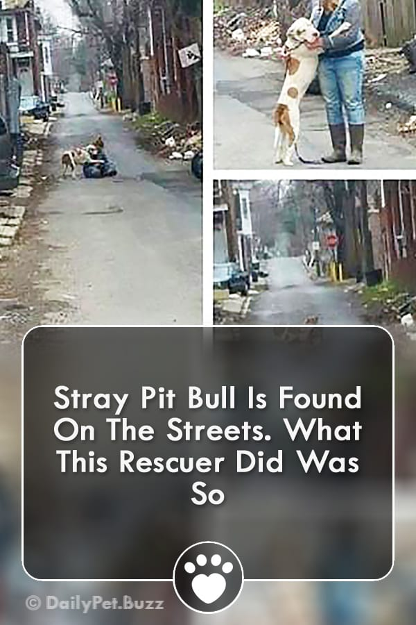 Stray Pit Bull Is Found On The Streets. What This Rescuer Did Was So