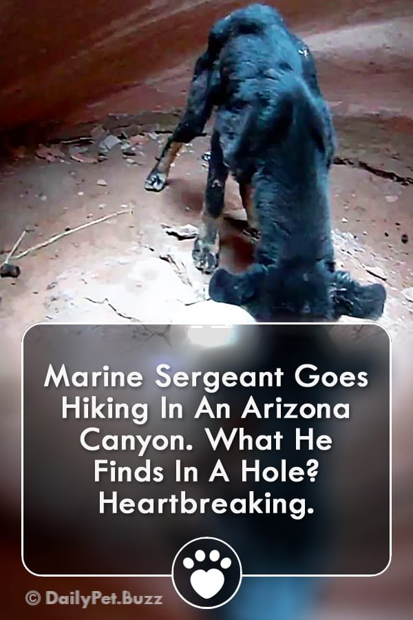 Marine Sergeant Goes Hiking In An Arizona Canyon. What He Finds In A Hole? Heartbreaking.