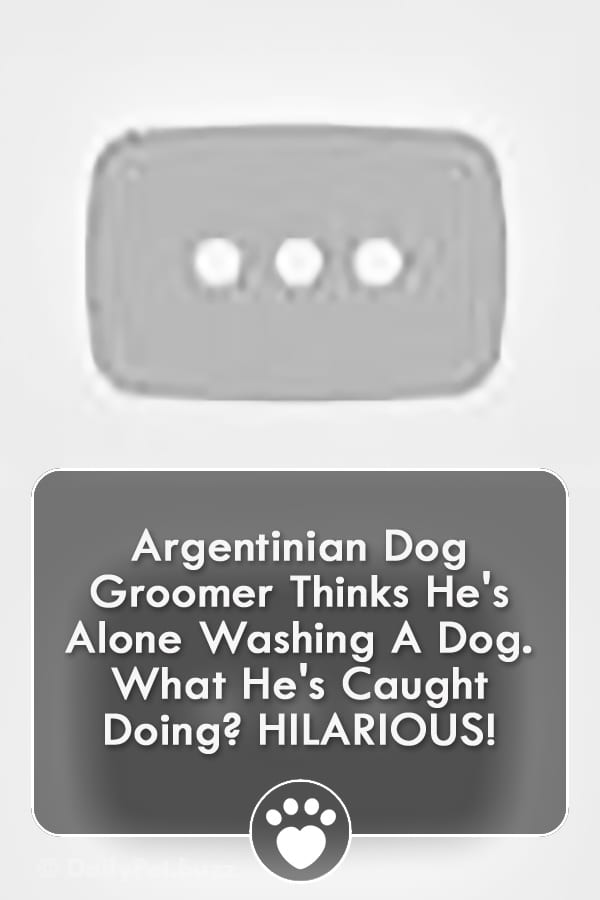 Argentinian Dog Groomer Thinks He\'s Alone Washing A Dog. What He\'s Caught Doing? HILARIOUS!