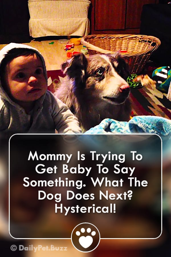 Mommy Is Trying To Get Baby To Say Something. What The Dog Does Next? Hysterical!