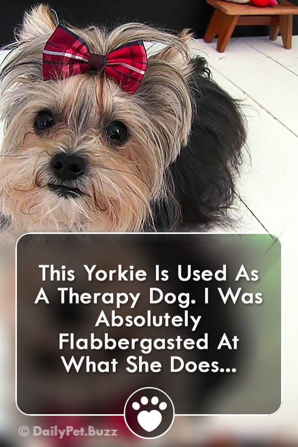 This Yorkie Is Used As A Therapy Dog. I Was Absolutely Flabbergasted At What She Does...