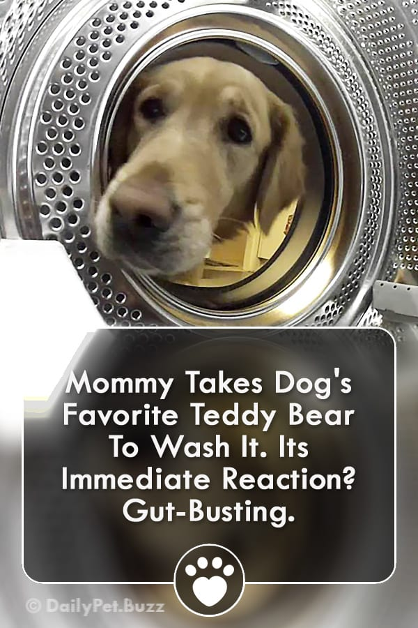 Mommy Takes Dog\'s Favorite Teddy Bear To Wash It. Its Immediate Reaction? Gut-Busting.