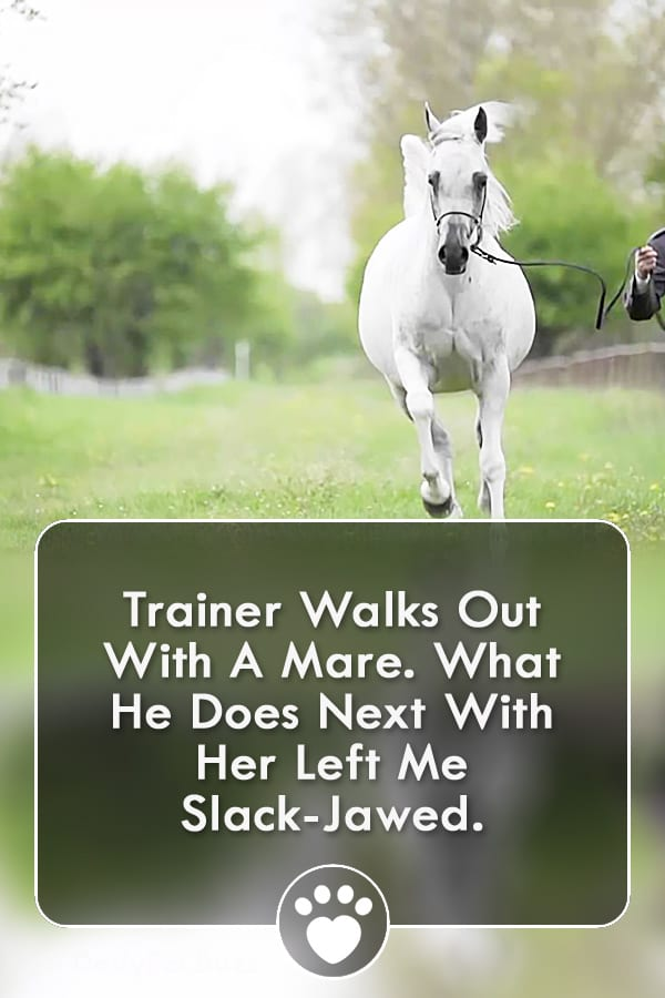 Trainer Walks Out With A Mare. What He Does Next With Her Left Me Slack-Jawed.