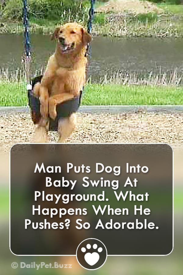 Man Puts Dog Into Baby Swing At Playground. What Happens When He Pushes? So Adorable.