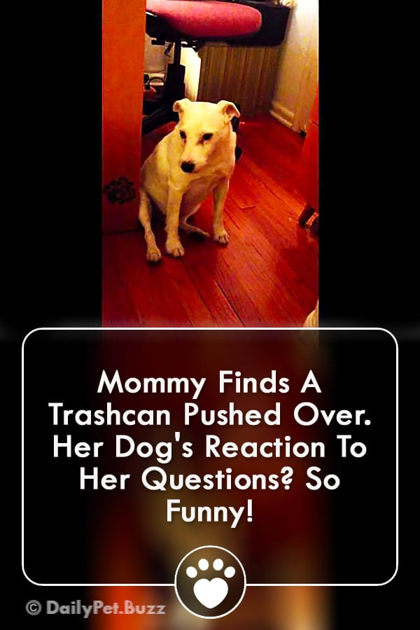 Mommy Finds A Trashcan Pushed Over. Her Dog\'s Reaction To Her Questions? So Funny!