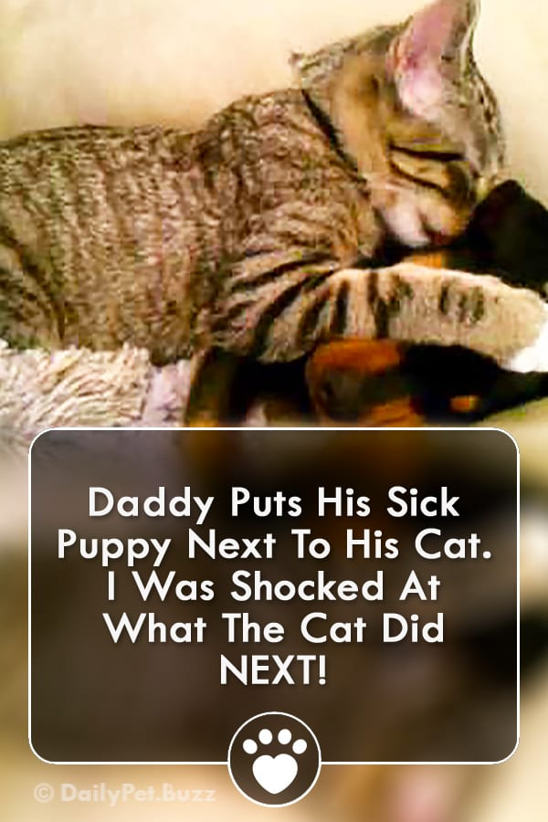 Daddy Puts His Sick Puppy Next To His Cat. I Was Shocked At What The Cat Did NEXT!