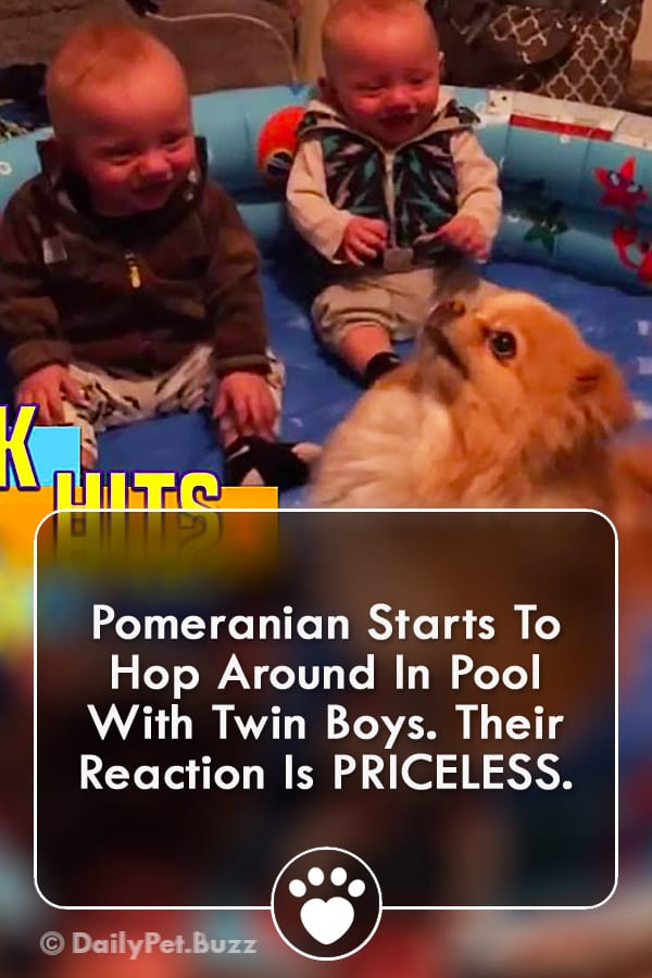 Pomeranian Starts To Hop Around In Pool With Twin Boys. Their Reaction Is PRICELESS.