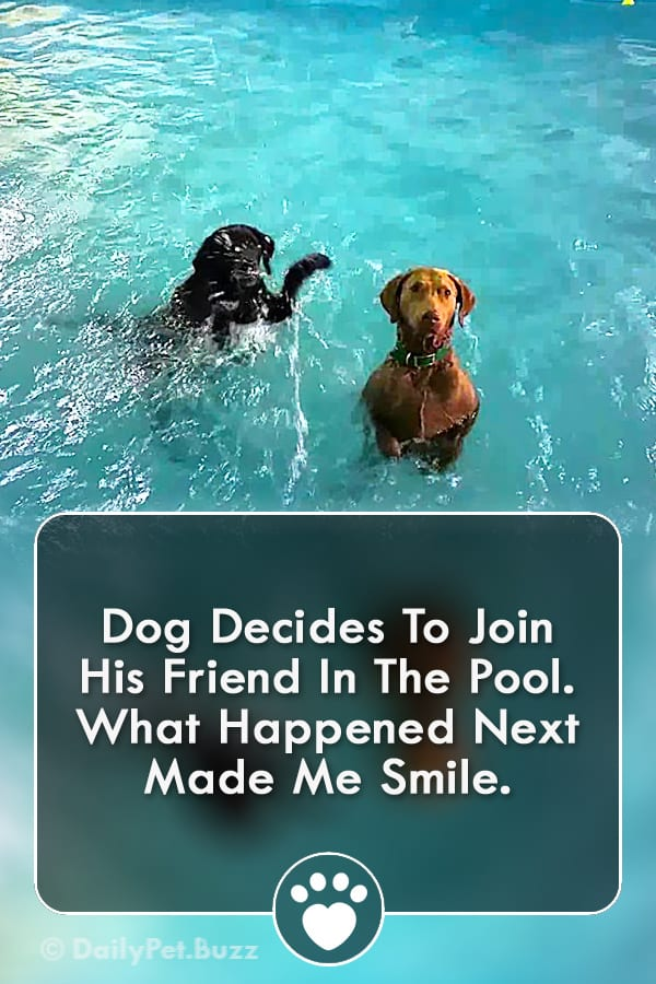 Dog Decides To Join His Friend In The Pool. What Happened Next Made Me Smile.