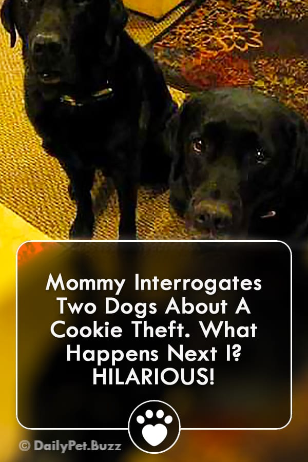 Mommy Interrogates Two Dogs About A Cookie Theft. What Happens Next I? HILARIOUS!