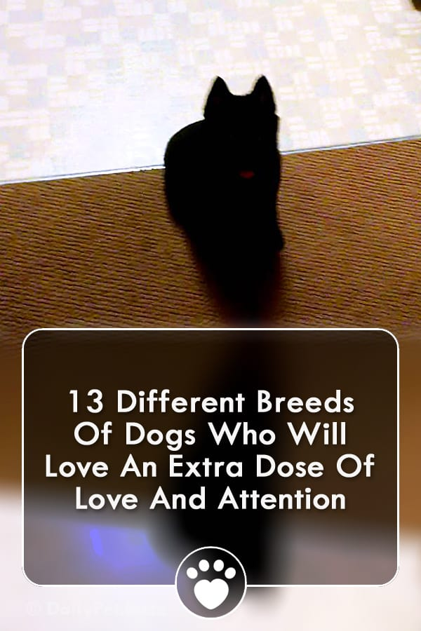 13 Different Breeds Of Dogs Who Will Love An Extra Dose Of Love And Attention