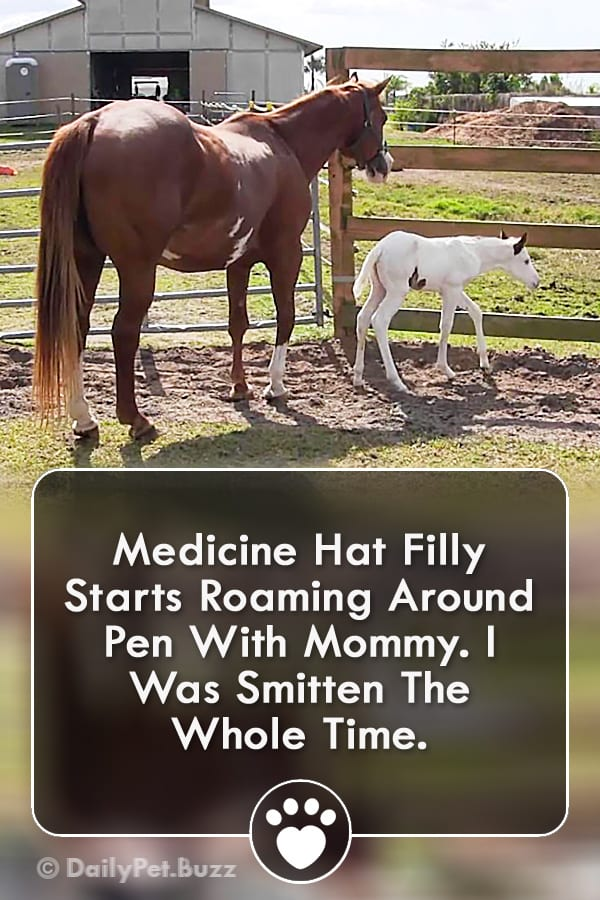 Medicine Hat Filly Starts Roaming Around Pen With Mommy. I Was Smitten The Whole Time.