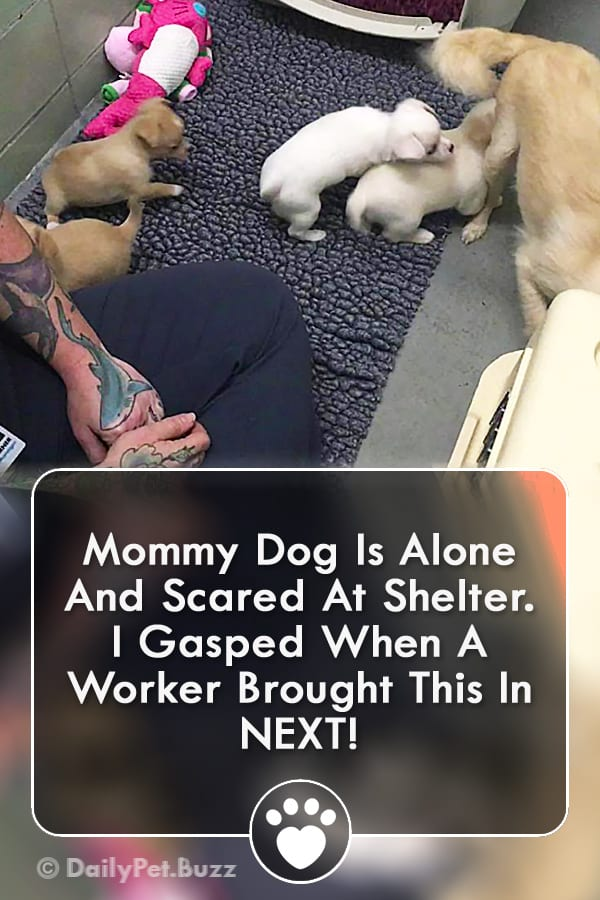 Mommy Dog Is Alone And Scared At Shelter. I Gasped When A Worker Brought This In NEXT!