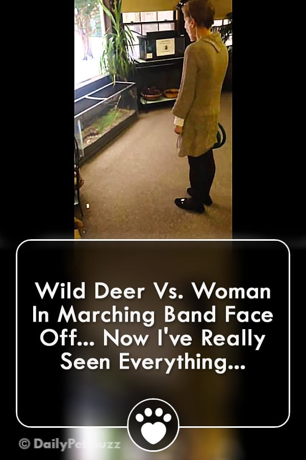 Wild Deer Vs. Woman In Marching Band Face Off... Now I\'ve Really Seen Everything...