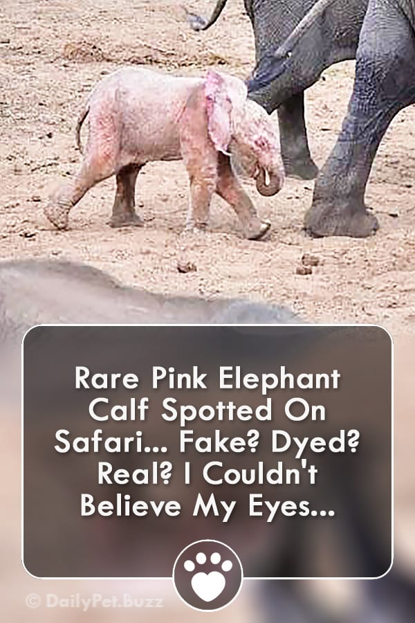 Rare Pink Elephant Calf Spotted On Safari... Fake? Dyed? Real? I Couldn\'t Believe My Eyes...