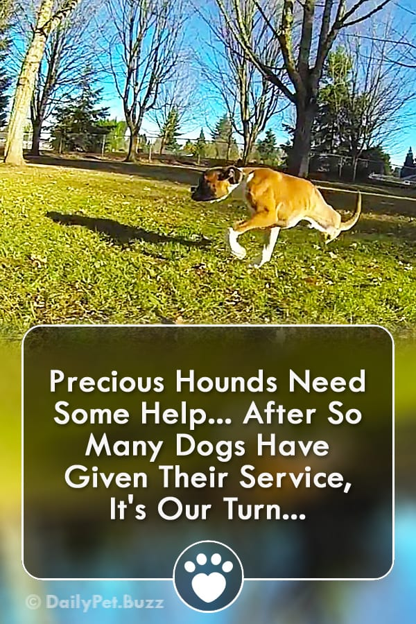 Precious Hounds Need Some Help... After So Many Dogs Have Given Their Service, It\'s Our Turn...
