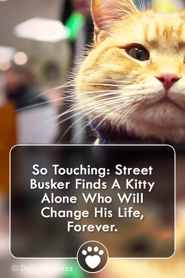 So Touching: Street Busker Finds A Kitty Alone Who Will Change His Life, Forever.