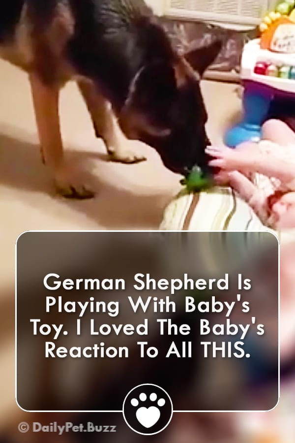 German Shepherd Is Playing With Baby\'s Toy. I Loved The Baby\'s Reaction To All THIS.