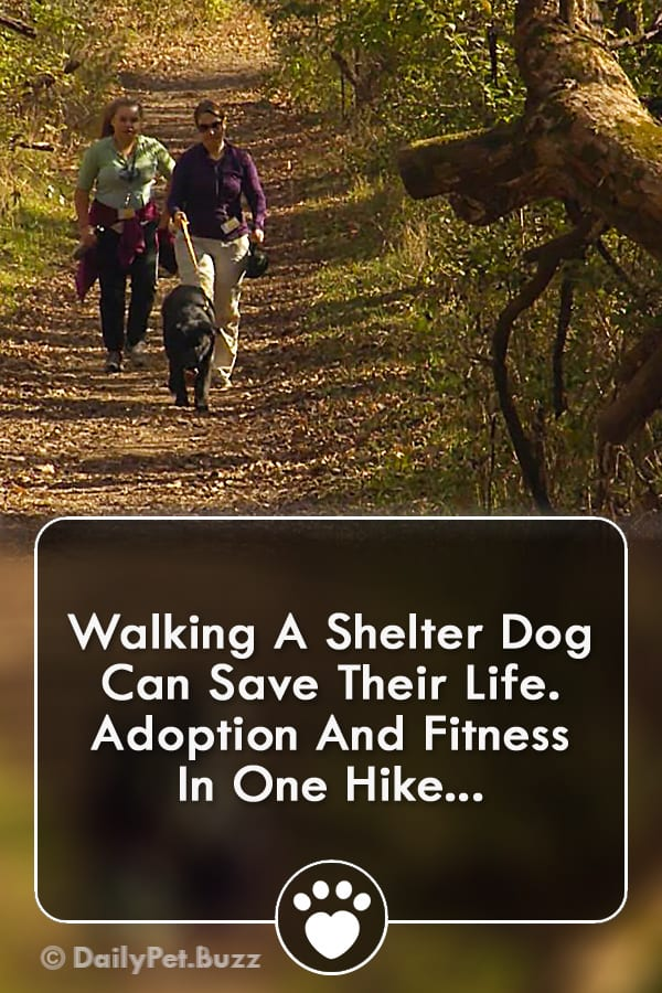 Walking A Shelter Dog Can Save Their Life. Adoption And Fitness In One Hike...