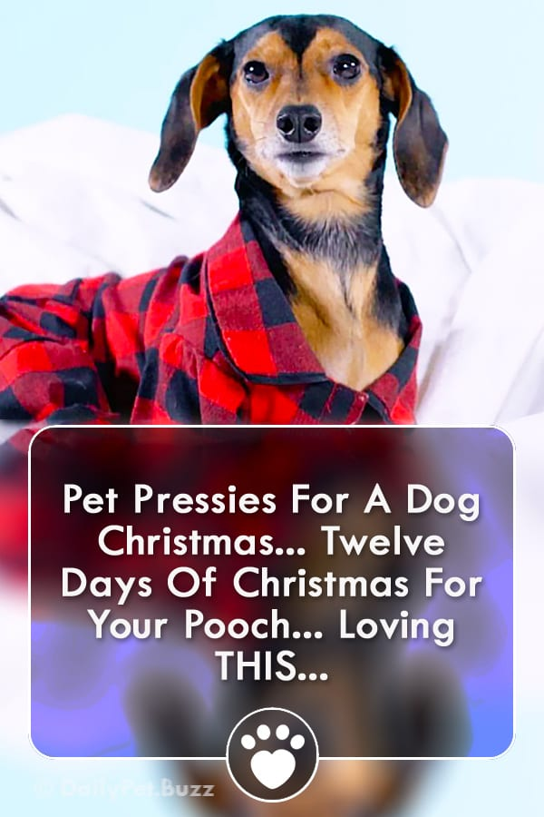 Pet Pressies For A Dog Christmas... Twelve Days Of Christmas For Your Pooch... Loving THIS...