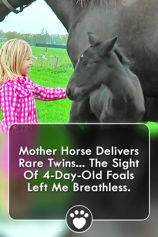 Mother Horse Delivers Rare Twins... The Sight Of 4-Day-Old Foals Left Me Breathless.