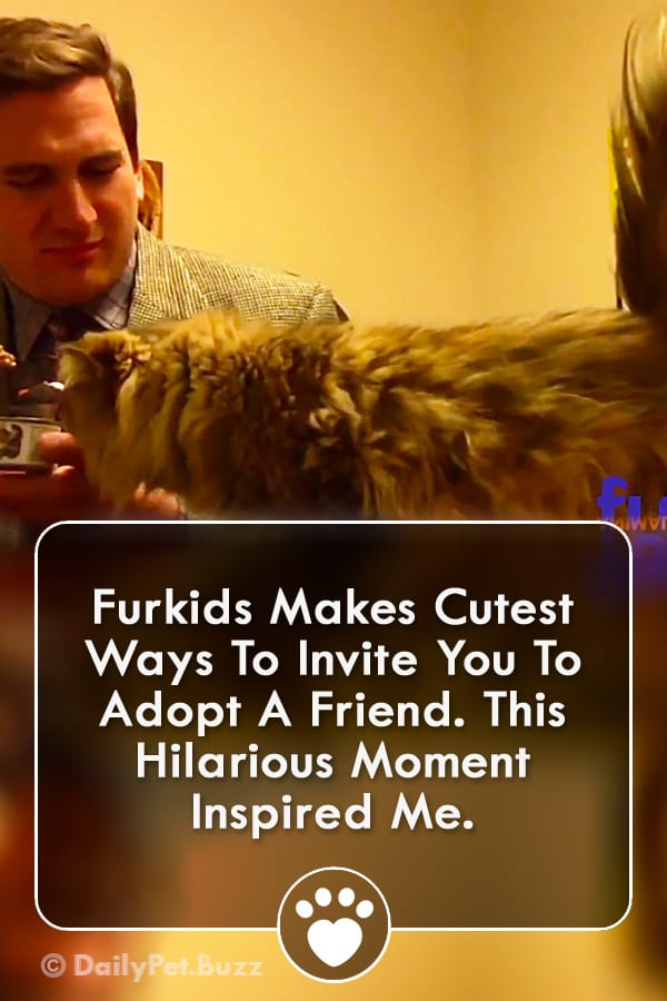 Furkids Makes Cutest Ways To Invite You To Adopt A Friend. This Hilarious Moment Inspired Me.