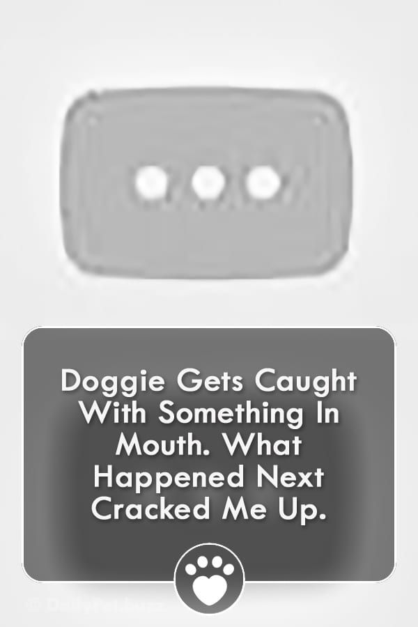 Doggie Gets Caught With Something In Mouth. What Happened Next Cracked Me Up.