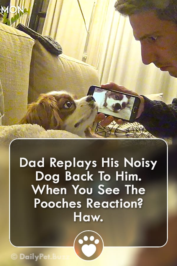 Dad Replays His Noisy Dog Back To Him. When You See The Pooches Reaction? Haw.