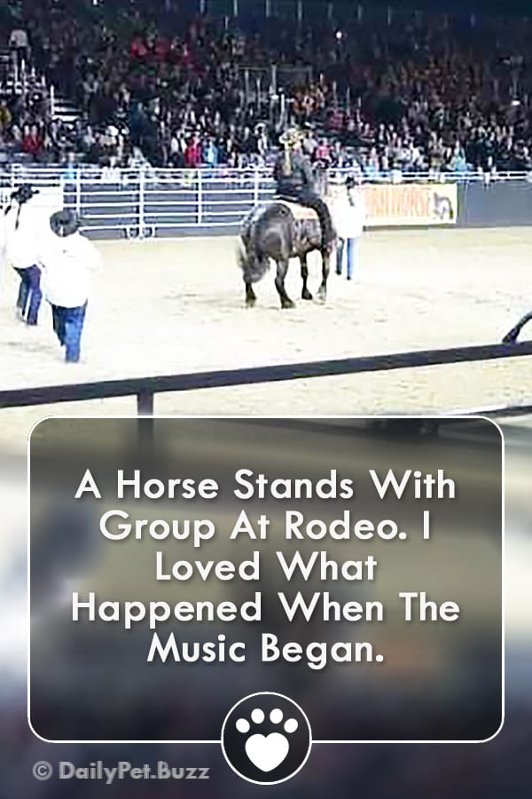 A Horse Stands With Group At Rodeo. I Loved What Happened When The Music Began.