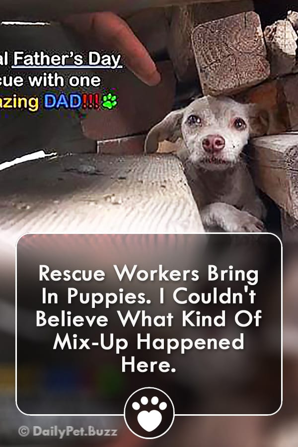 Rescue Workers Bring In Puppies. I Couldn\'t Believe What Kind Of Mix-Up Happened Here.