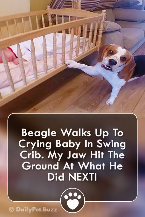 Beagle Walks Up To Crying Baby In Swing Crib. My Jaw Hit The Ground At What He Did NEXT!