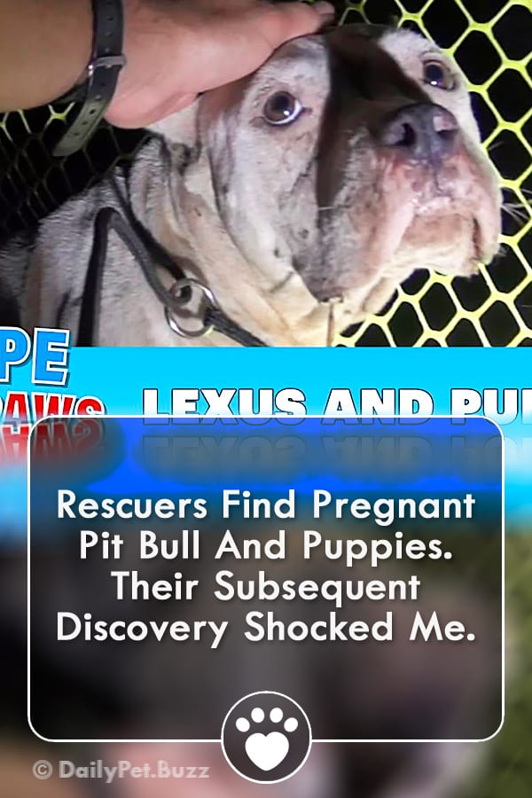 Rescuers Find Pregnant Pit Bull And Puppies. Their Subsequent Discovery Shocked Me.