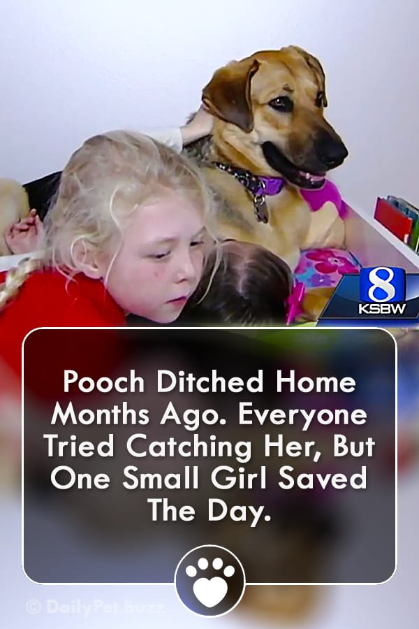 Pooch Ditched Home Months Ago. Everyone Tried Catching Her, But One Small Girl Saved The Day.
